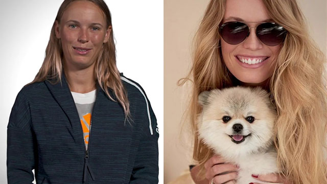 WTA众星都喜欢什么宠物 看看有没有你家同款